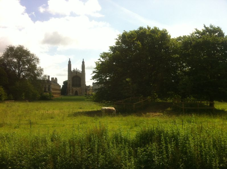 Kings College chapel and cow
