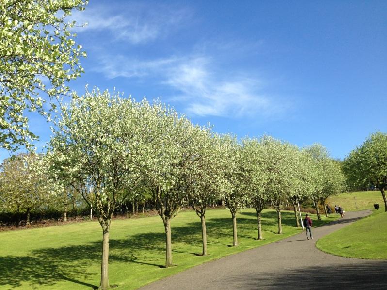 Dunfermline trees