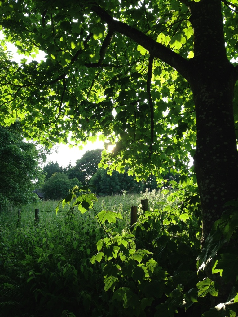 dappled trees