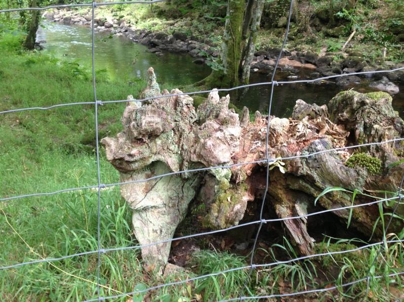 tree trunk dragon