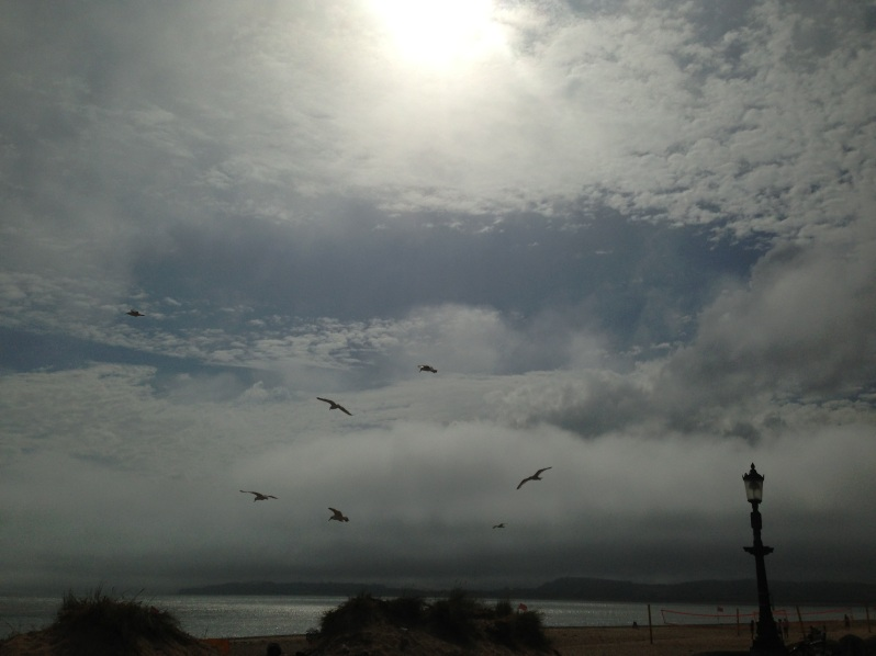cloud + seagull