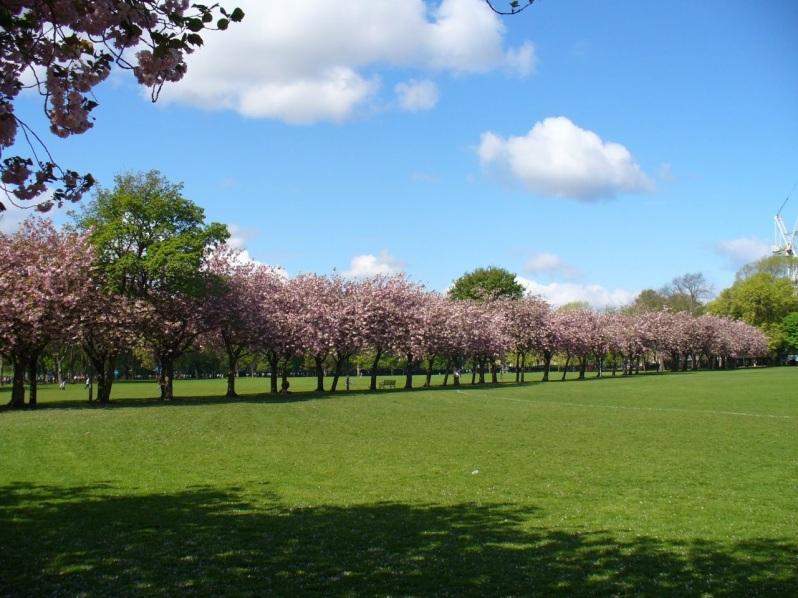 Edinburgh Meadows
