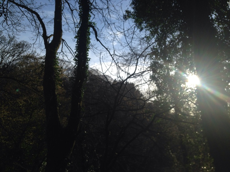 sun glinting through trees