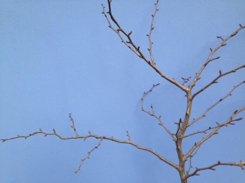 tree on blue
