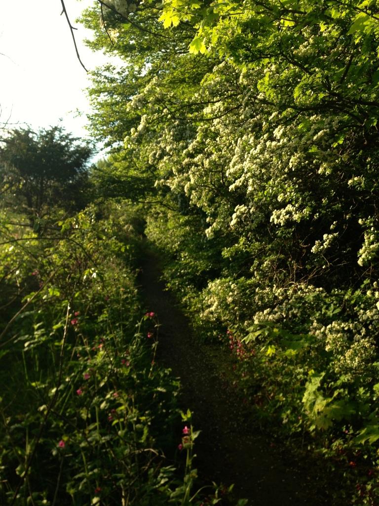 hawthorn path