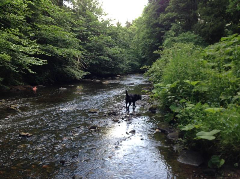 dog paddling