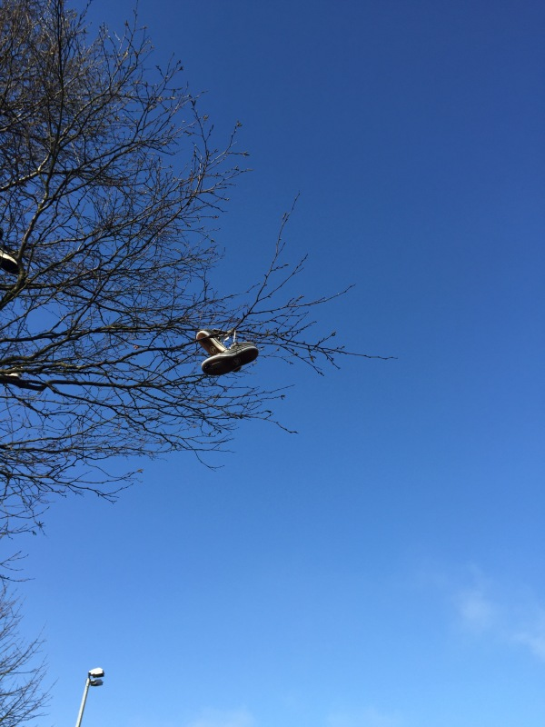 trees, shoes hanging in branches