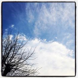 tree, clouds
