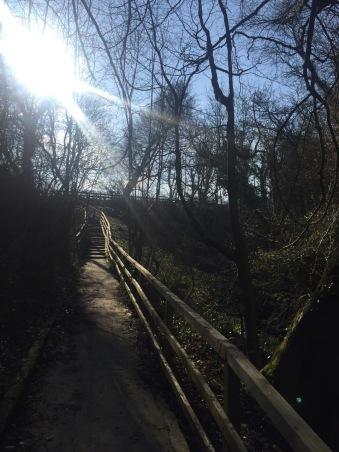sunlight through trees and starirs edinburgh
