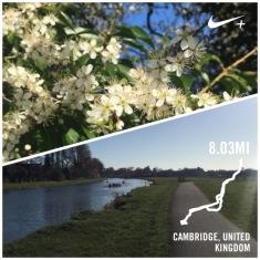 cambridge morning run - 1 (9)