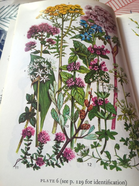 Coloured book plate from Richard Mabey book