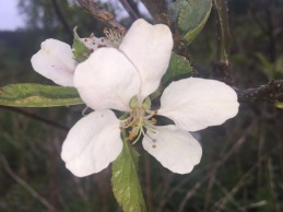 springwatch - 1 (2)