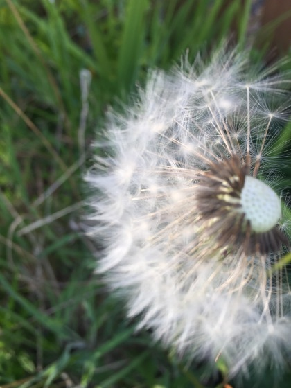 springwatch - 1 (6)